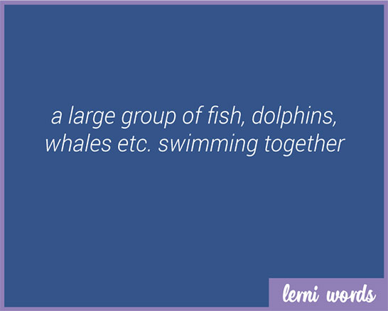 School of dolphins - Lerni Words